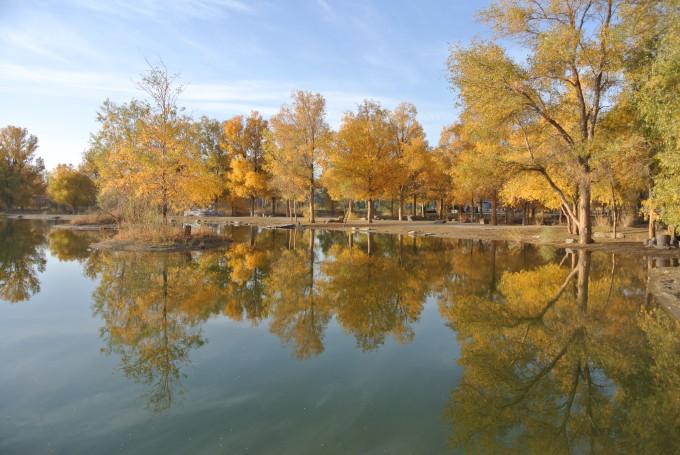 而每一棵高大的胡杨树冠枝头,间或又有浅绿,淡黄的叶片在闪现,错落有