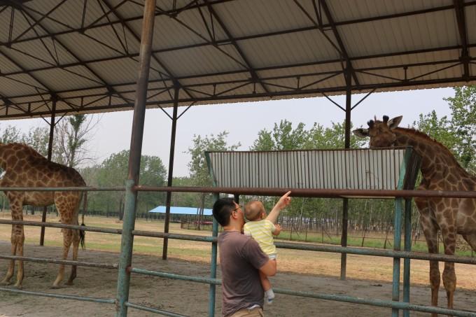 第一次看大象-自驾从兴城海滨到秦皇岛野生动物园