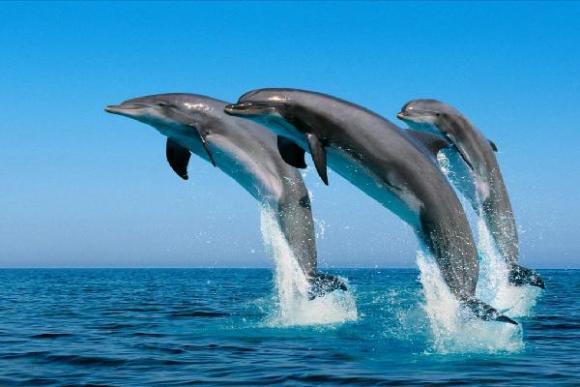壁纸 动物 海洋动物 鲸鱼 桌面 580_387