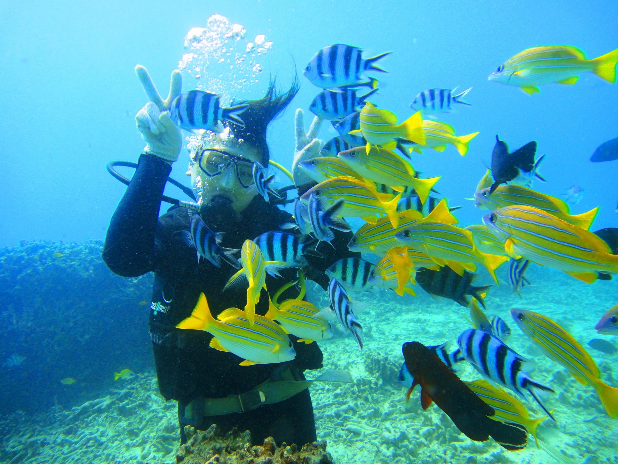风景图画海底世界分享展示