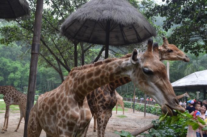 长隆动物世界·母亲节一日游