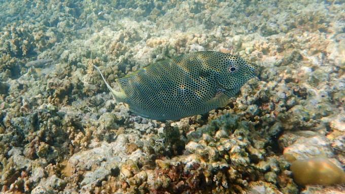 神仙珊瑚岛 摄记