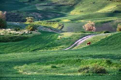 天山脚下的瑞士风光带,万亩麦浪.
