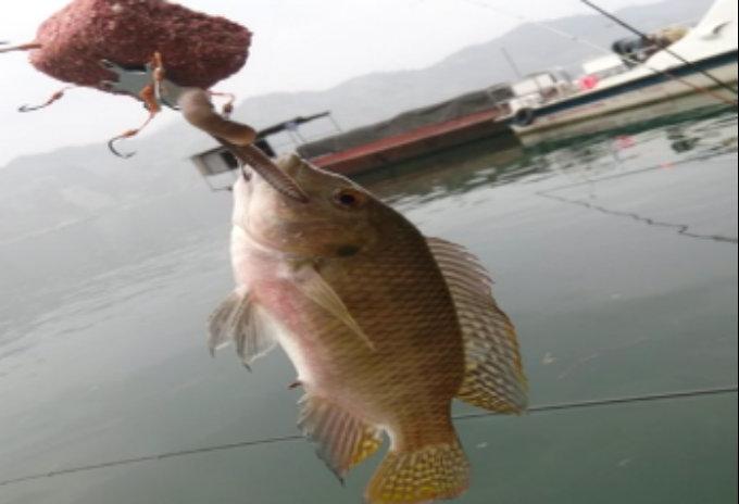 此珍稀野生动物在贵州仅产于与黔桂交界的罗甸县境内